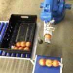 Die Blu-Roboter; eine wirtschaftliche Roboter Pick-and-Place-System gezielt auf niedrige Produktions oder saisonale Packer unterstützen