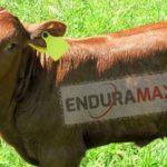 Enduramaxx provides farmers with a range of liquid fertiliser tanks