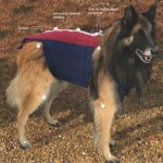 анализ собачьей походки