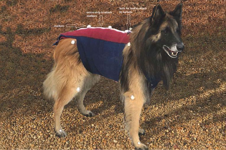 canine gait analysis