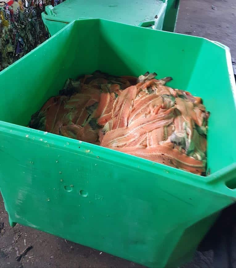 déchets de saumon